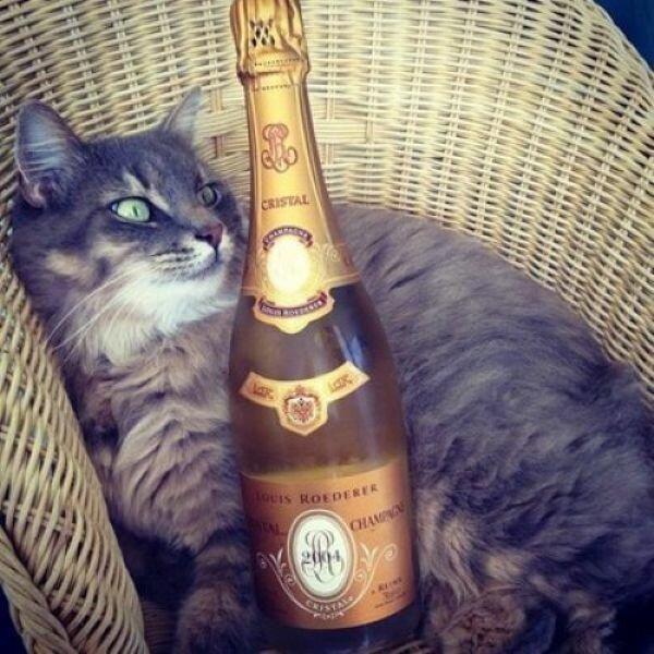 Коты богатеньких хозяев в Инстаграме