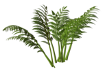 R11 - Nature Time 1 - Fern - 001.png