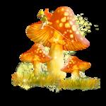 mushroom 15.png