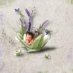 «Lavender Time» 0_90bc4_d45b88e2_S