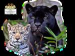 12926131074_animaux_nikita.png