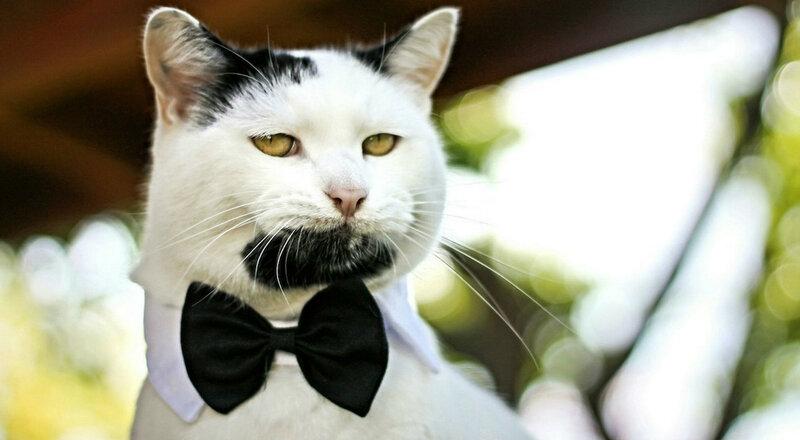 Бородатый кот-хипсетр Гэри