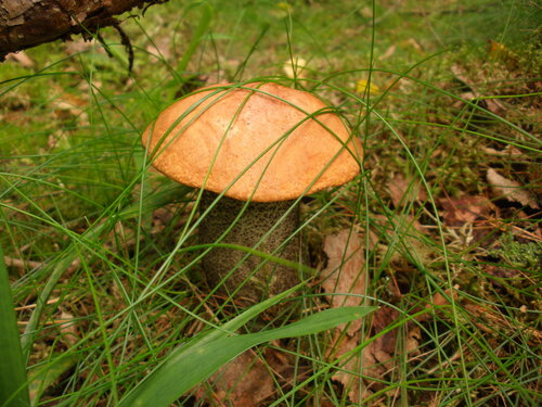 Фотоохота на грибы.