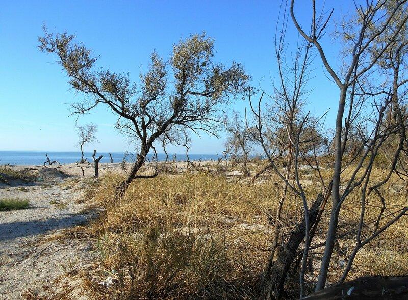 Октябрь, лесок у моря ... DSCN1770.JPG