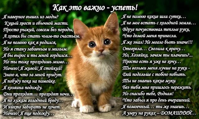 грустные картинки животных до слез