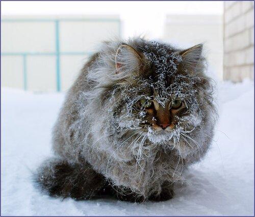 Глобальное изменение климата больно ударило по котам
