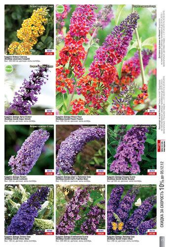 Каталог «Саженцы 2013!» Открыт приём заказов! www.gardenshop.ru