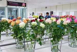 Купить цветы на аукционе в голландии онлайн искуственные цветы купить оптом донецк