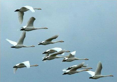 смотрите а также метронидазол птице инструкция по применению, в мире животных птицы. птицы на птичьем рынке.
