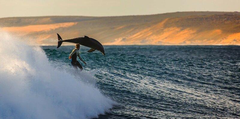 Серфингист и дельфин