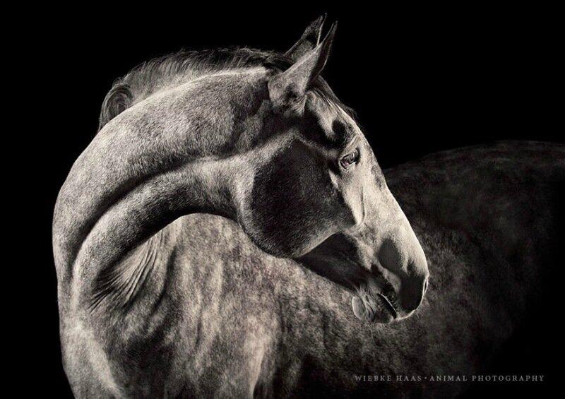 Wiebke Haas: Девушка бросила скучный офис и начала фотографировать лошадей!