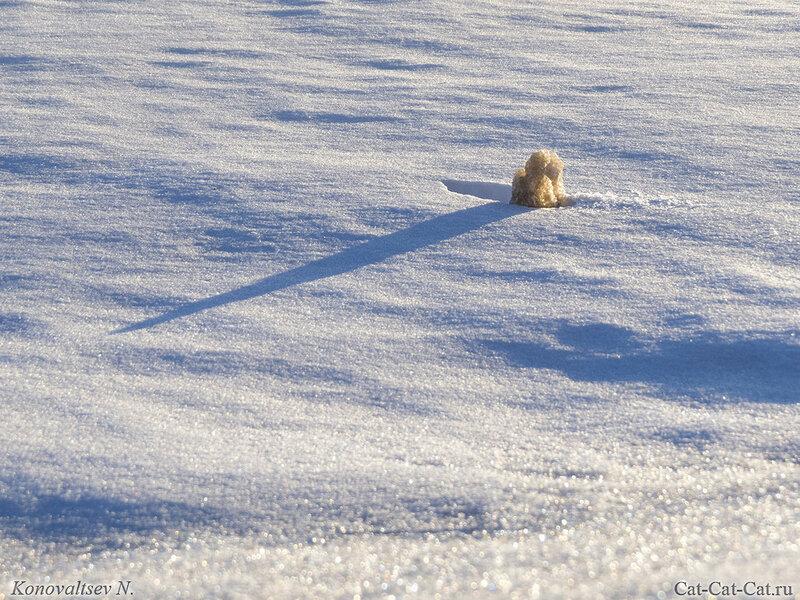 Льдинка в снегу