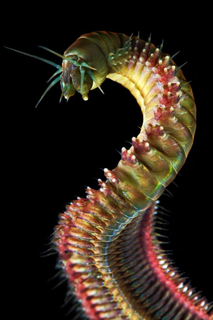 7. Еще один морской червь.
