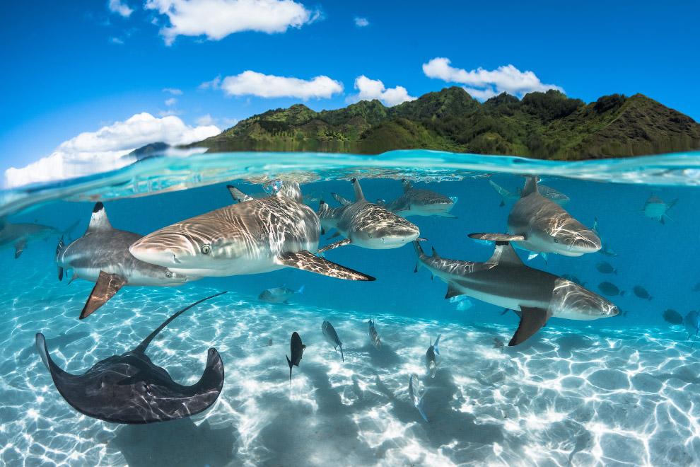 7. Победитель в категории «Макро». Затонувший буксир «Саба», остров Кюрасао. (Фото Thomas Heckm