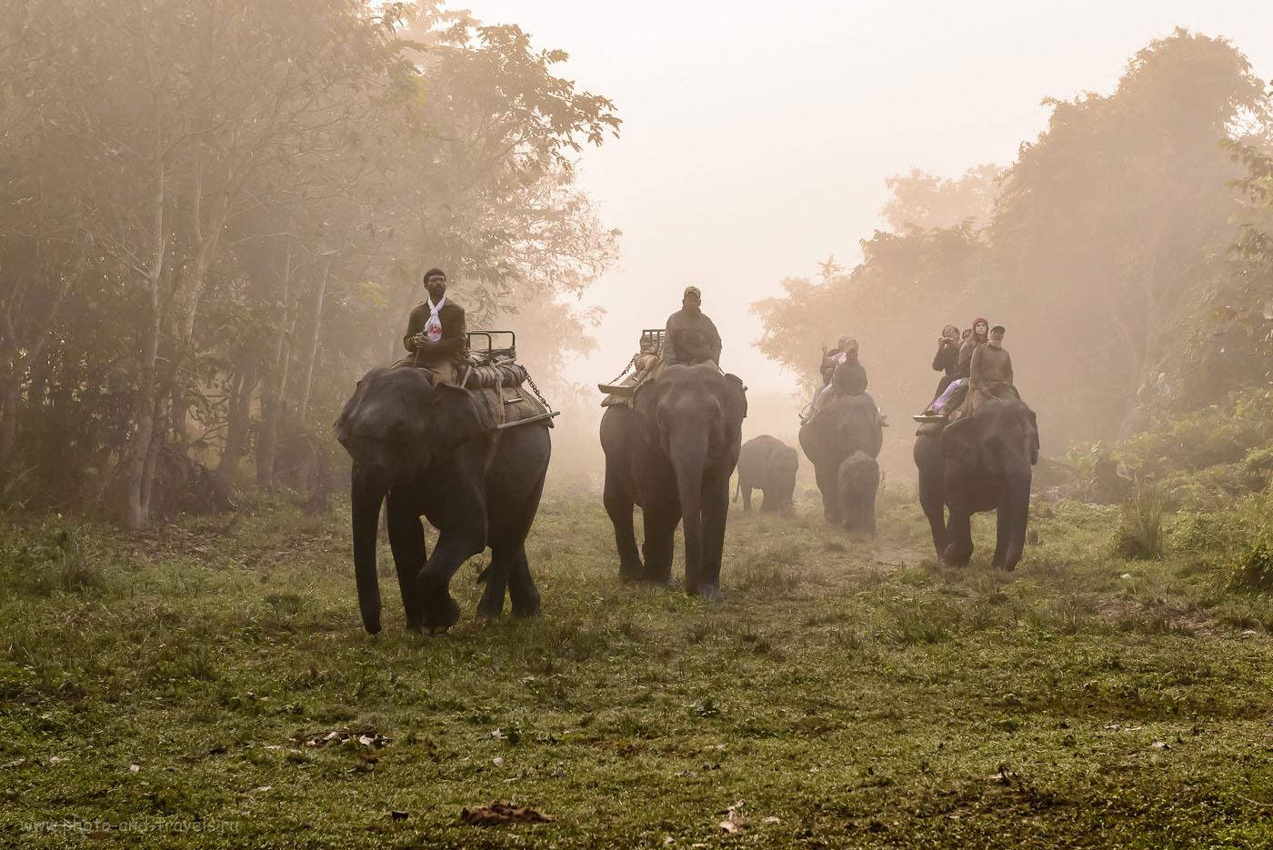 Фотография 3. Сафари на слонах в парке Казиранга в Индии. Отзывы о самостоятельном путешествии по Северо-Востоку страны. 1/1000, -0.67, 8.0, 2500, 70. Никон 24-70/2,8