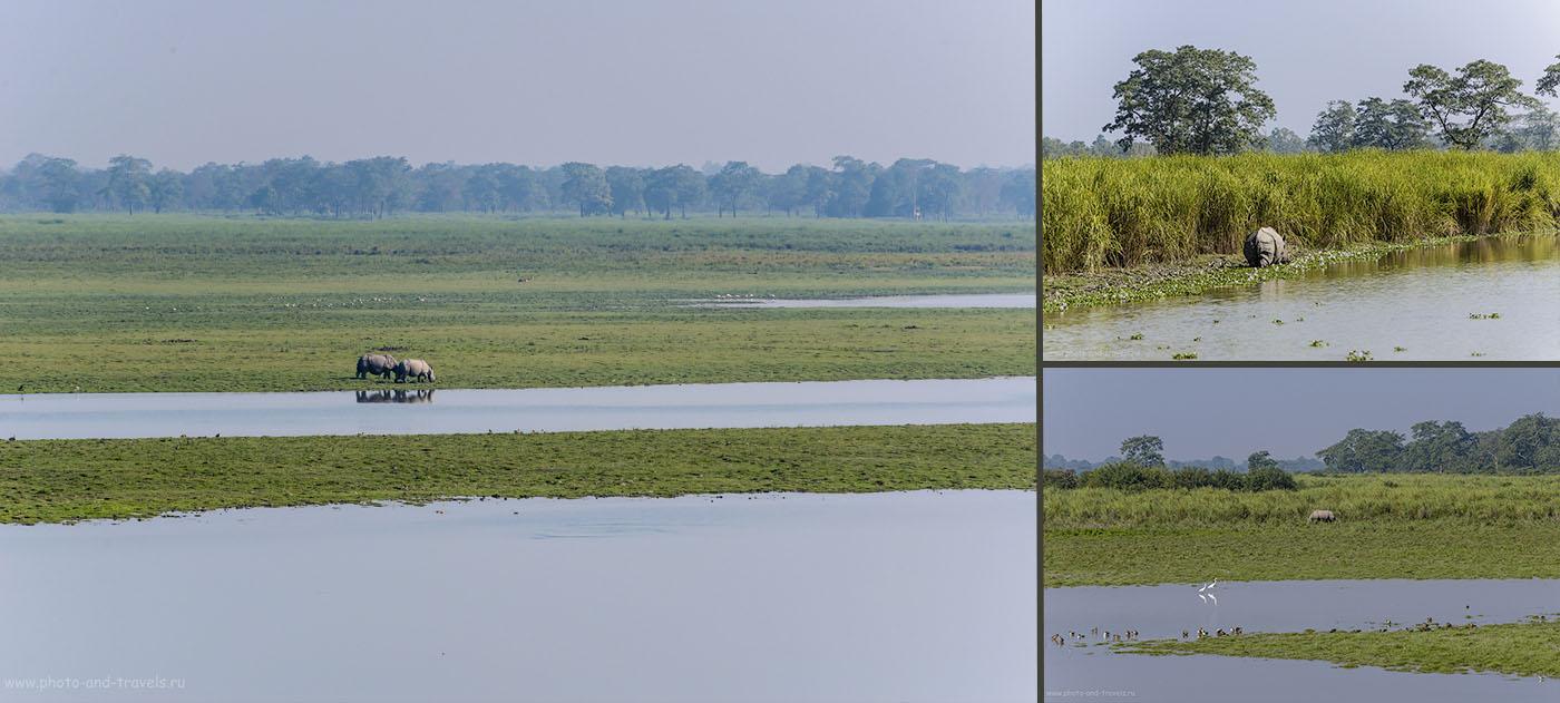 Фото 23. Отзывы о джип-сафари в Kaziranga National Park. Где увидеть носорогов в Индии.
