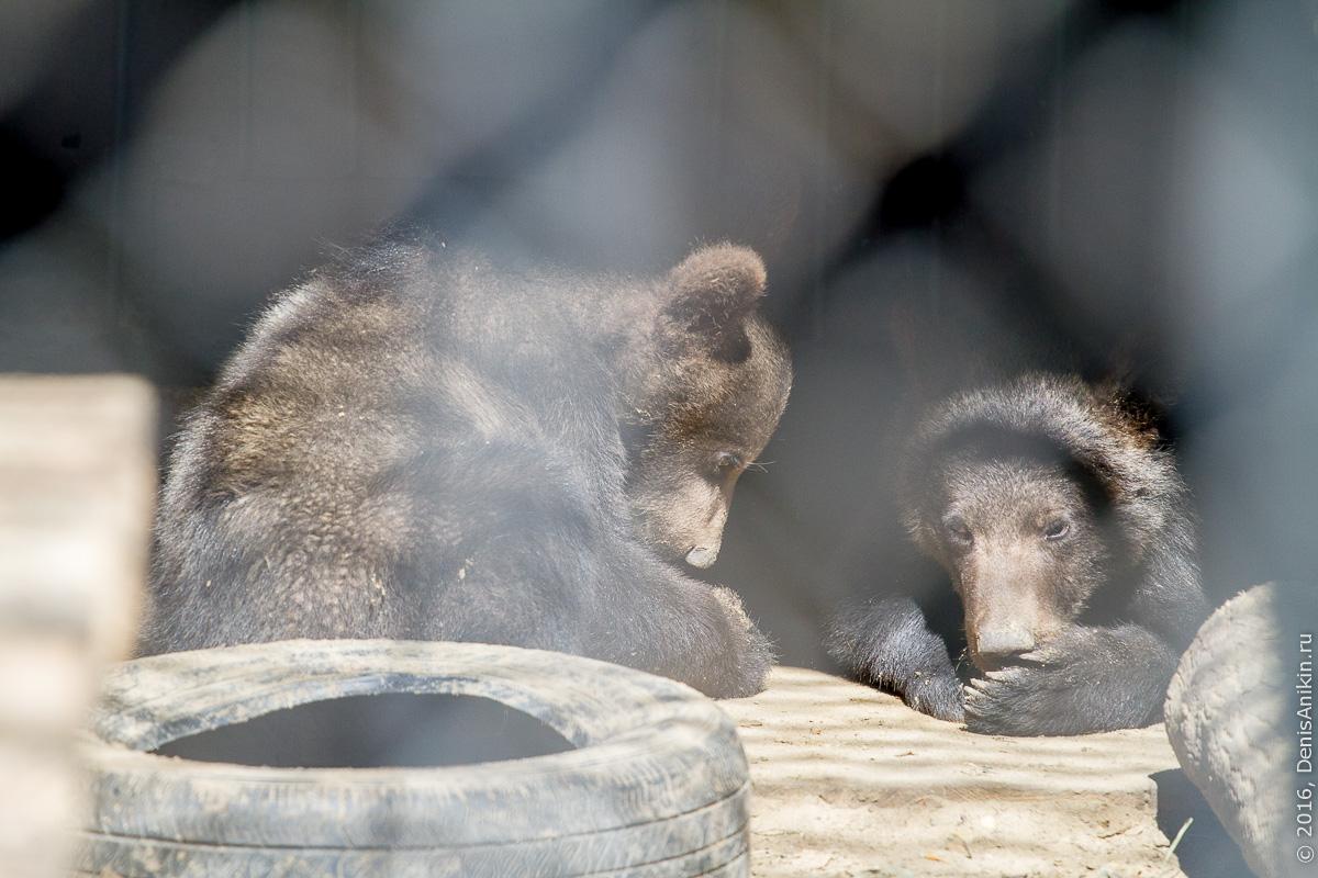 Пензенский зоопарк. Животные 12