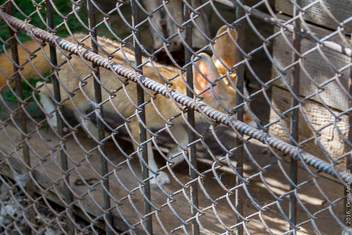 Пензенский зоопарк. Животные 15
