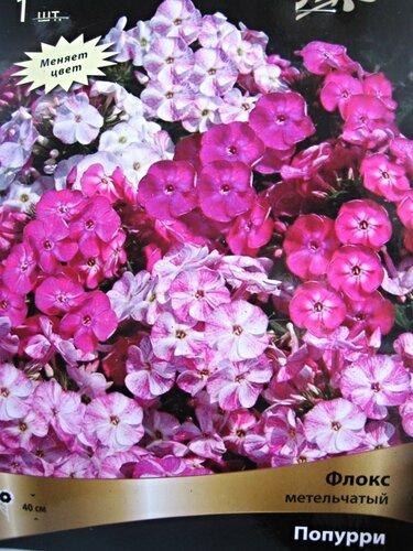 Высота цветы флоксы
