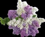 цветы (85).png