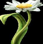цветы (162).png