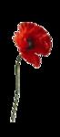 цветы (189).png