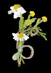 Palvinka_FlowerAdventure_cluster3.png