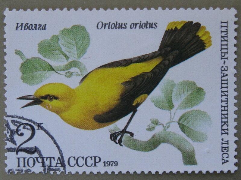 Иволга (Oriolus oriolus).