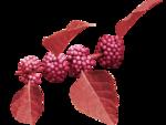 Delph_forestfruits_el17.png