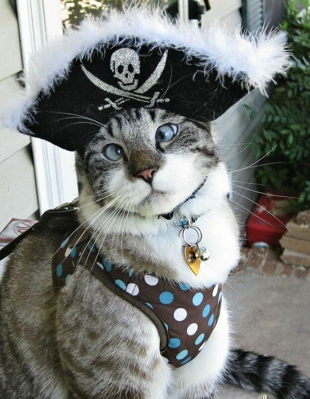 Спанглс - самый милый косоглазый кот в интернете