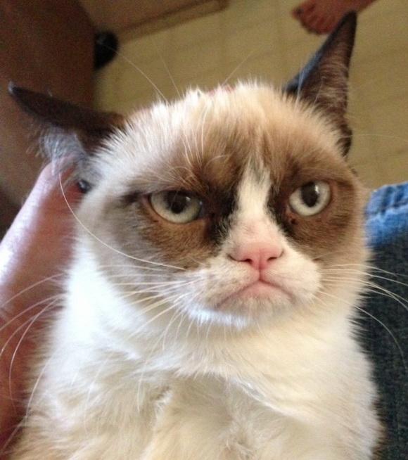 Кот по кличке tard также известный как