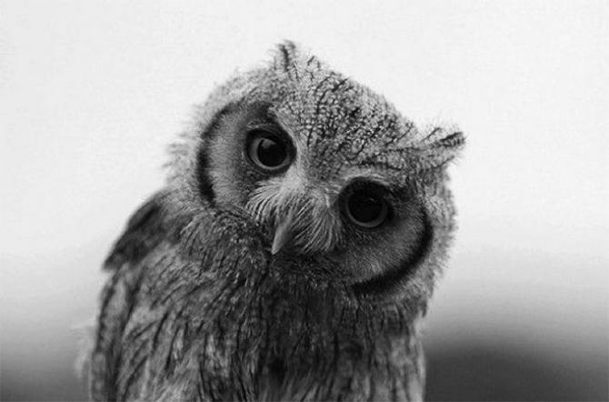 Фото «Этим глазам невозможно отказать»