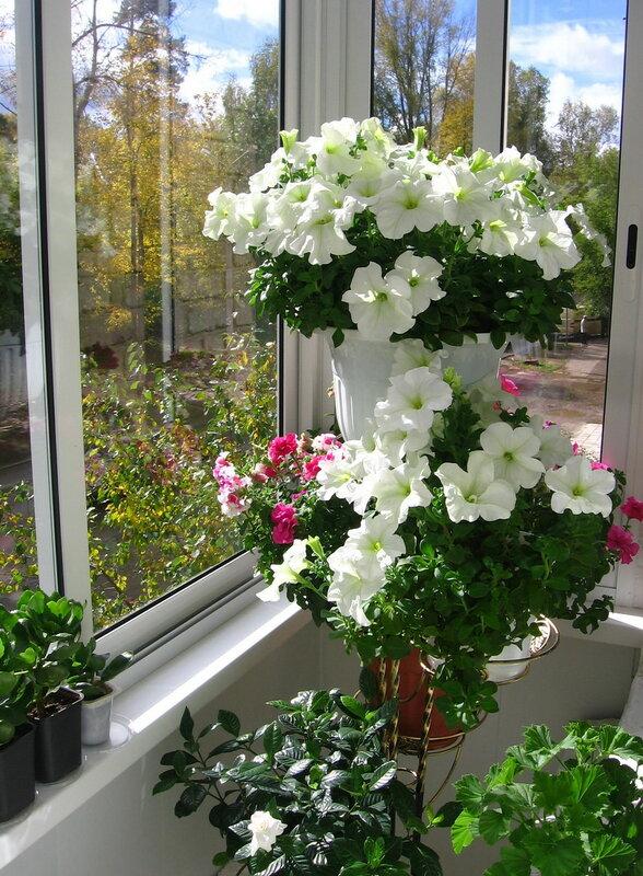 Оформление балкона цветами.