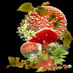 mushroom 2.png