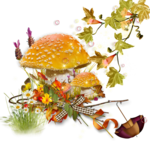 mushroom 11.png