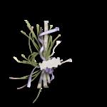 «Lavender Time» 0_90bd1_7a9b5791_S