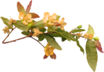 feli_nb_flowers branch.png