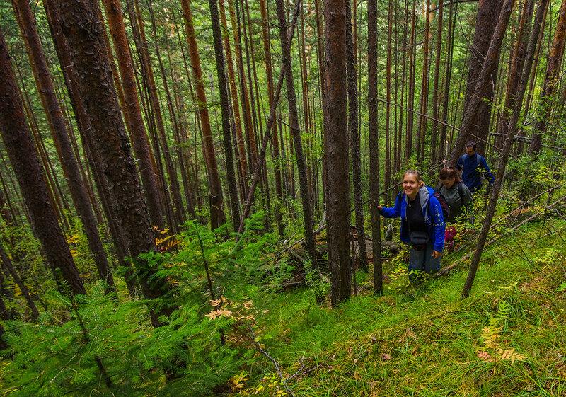 Идём по лесу