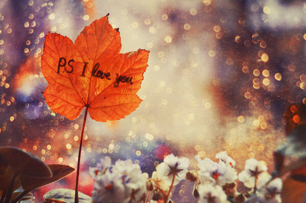я тебя люблю осень картинки