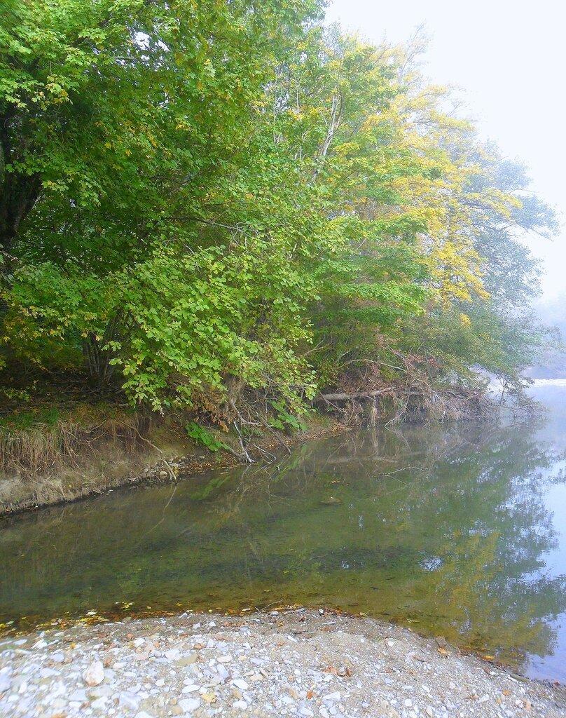 Октябрь, в лесу, окрестности Горячего Ключа, 2014 год