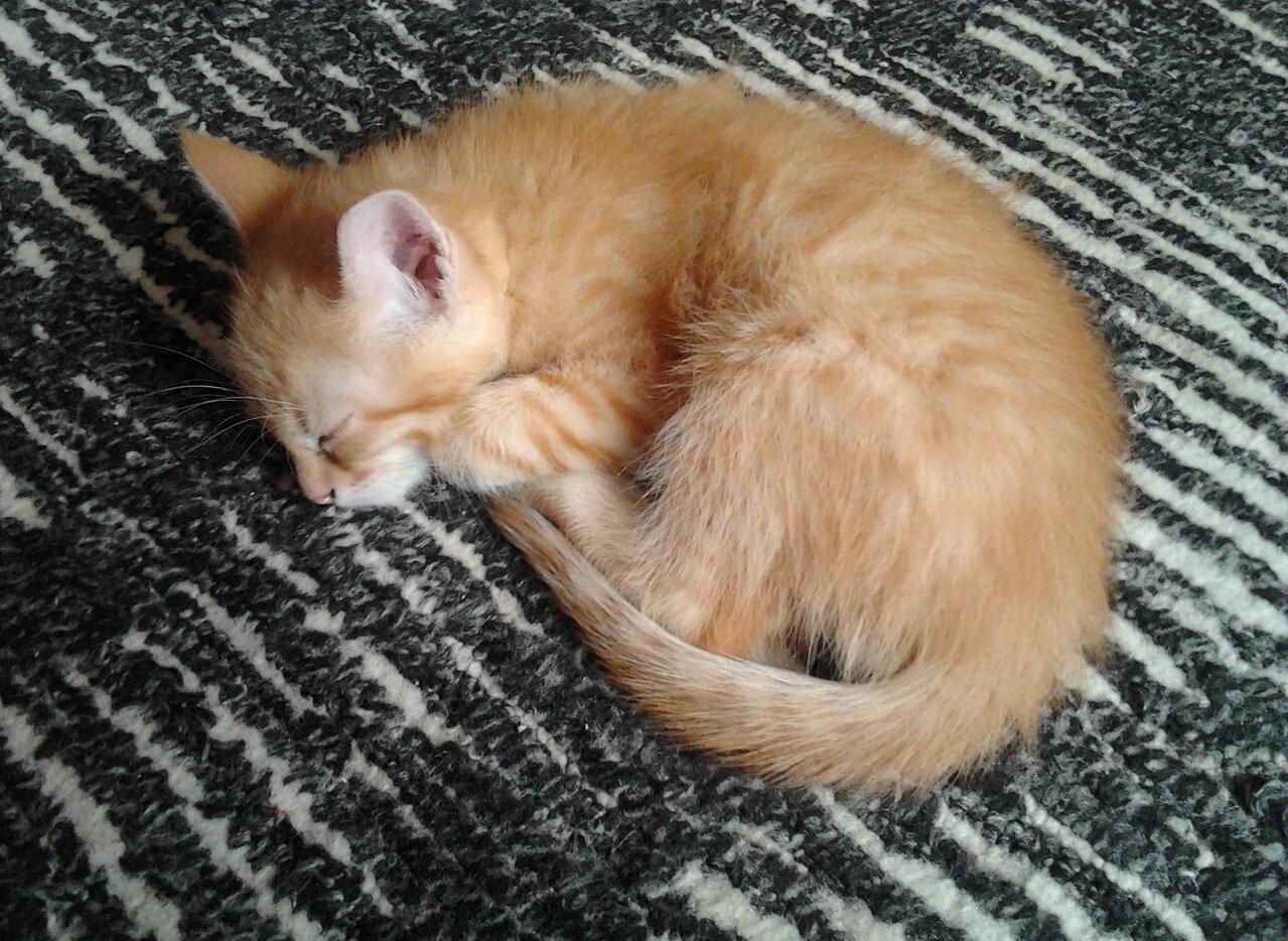 приютил котёнка