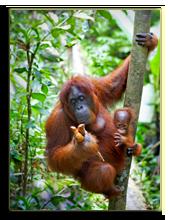 Малайзия. о.Борнео. Фото kjorgen - Depositphotos