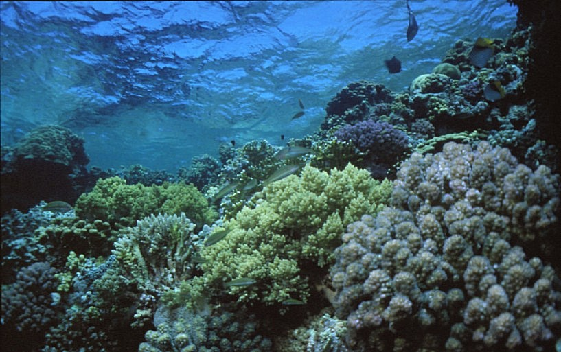 фото кораллы красного моря