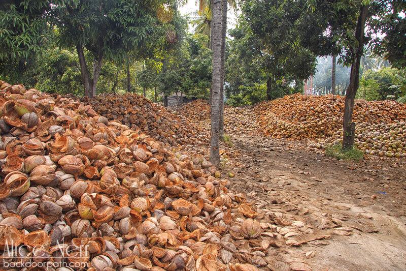 Свалка кокосов