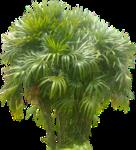 Неразобранное в Растения