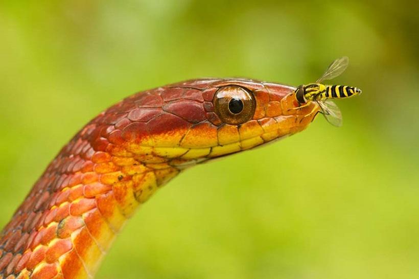 Пугающие фотографии змей 0 134aca a514c47e orig