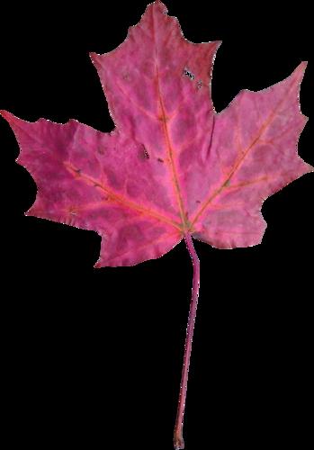 «Autumn Glow» 0_98092_5b9d8a17_L