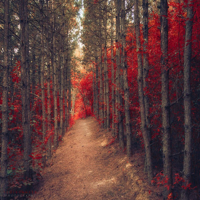 Таинственный лес от Ildiko Neer