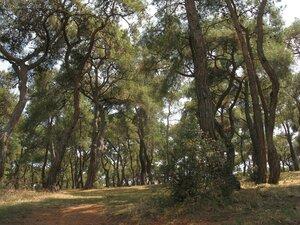 Белградский лес в окрестностях Стамбула