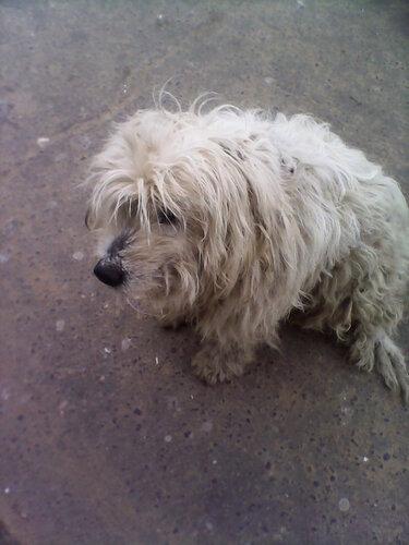 Большая бездомная лохматая собака